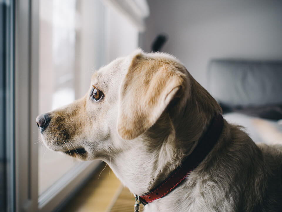 Stop Dog Scratching Door By Protecting With Window Film